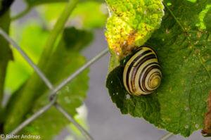 Da wo ein Garten leben kann, kommt Leben auf.
