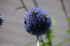 Der Garten zieht Insekten an.
