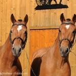 Der Kanton Jura: Pferdezucht und Uhrenindustrie