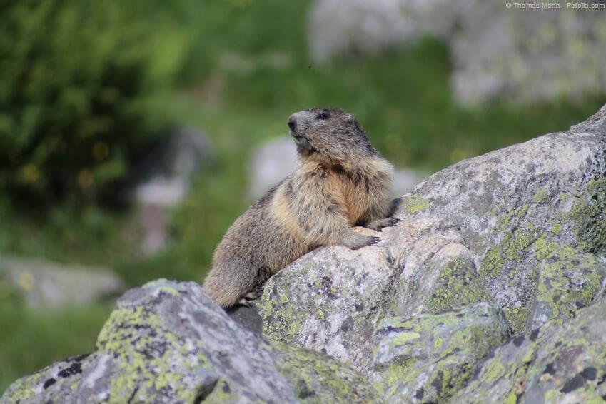 Einzigartige Natur im Kanton Graubünden
