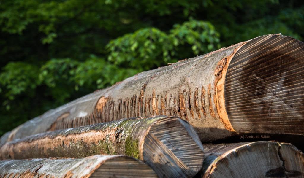 Holzo: Holzhaus bauen mit dem Rohstoff Holz