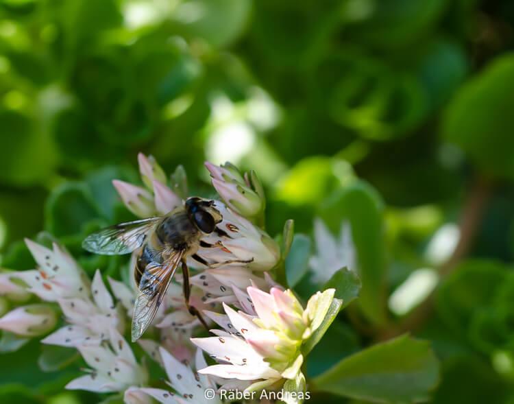 Je mehr Naturgarten, desto mehr Insekten und Leben im Garten