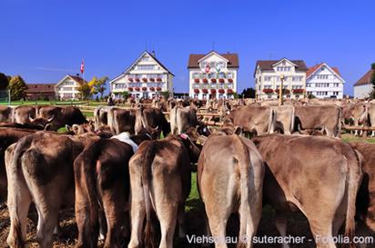 Appenzell Innerrhoden ist bekannt für Viehschau Anlässe