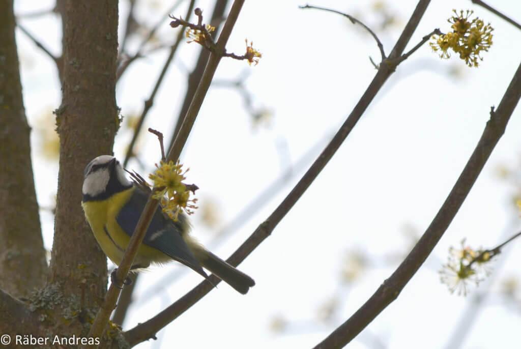 Ein natürliche Garten ist auch ein Vogelparadies
