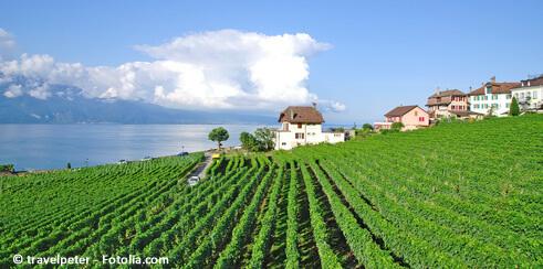Weinanbau am Genfersee